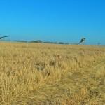Photo d'un chasseur tirant un faisan