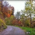 Photo de la forêt en automne