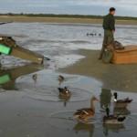 Des chasseurs en Baie de Somme