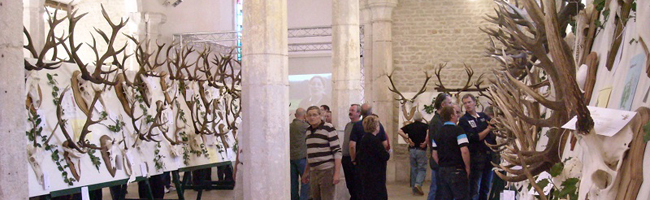 Exposition des trophées de cerfs à l'Abbaye d'Auberive