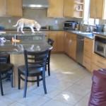 Un beagle vole les nuggets de poulet de son maître