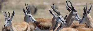 chasse en Namibie avec Hunting Pleasure