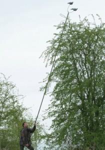 Installation du mât à pigeon dans les arbres