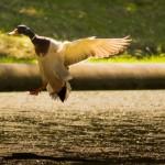 chasse : étude socio-économique