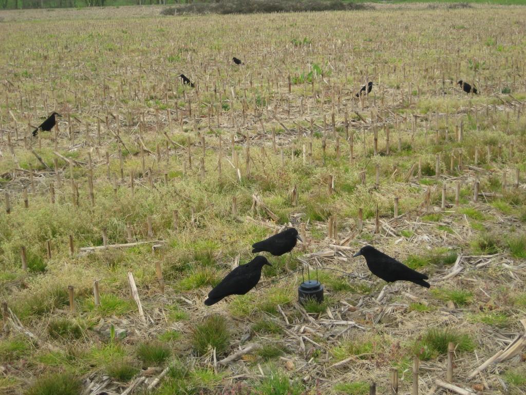 Manège à corbeau ducatillon