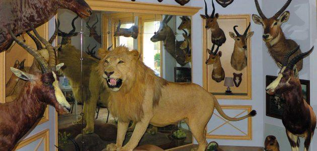 de retour d'un safari de chasse