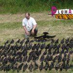 Articles de chasse sur Plumaffut