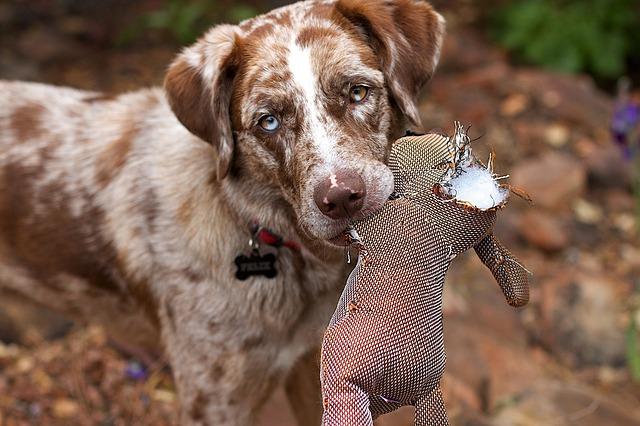 Protéger son chien de chasse en souscrivant une assurance
