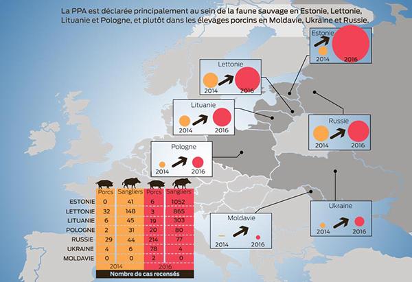 Pays touchés par la propagation du virus de la peste porcine africaine
