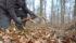 Une personne ramasse une mue de cerf dans un bois