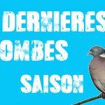 Pigeon ramier : vidéo de chasse